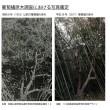 葡萄櫨の原木写真鑑定-02