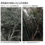 授業【地域デザイン】発見!消えた天然記念物「葡萄櫨の原木」は生きていた?!