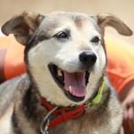 学校の癒し犬「ばなな」の訃報