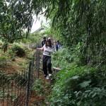 地域デザイン 葡萄櫨の原木調査「県による視察」