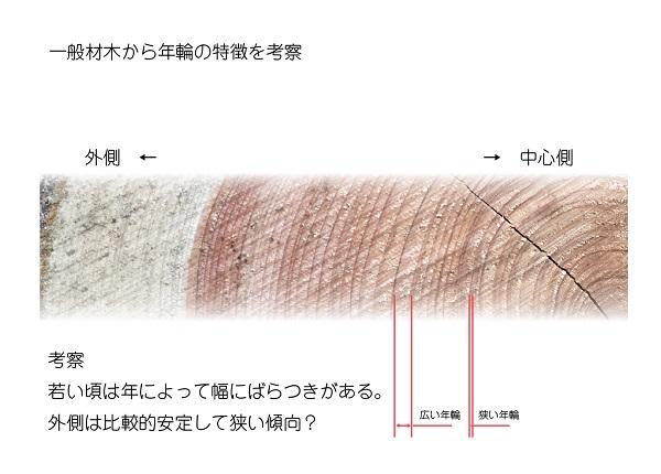 一般材木から年輪の特徴を考察-01