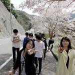 校外活動 雨山の郷桜祭り見学