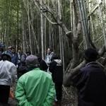 地域デザイン 葡萄櫨の原木調査 「和歌山県の年輪調査に同行」