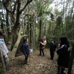地域デザイン【葡萄櫨の原木調査】県による竹の除去作業