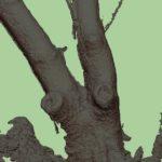 葡萄櫨の原木3Dスキャン